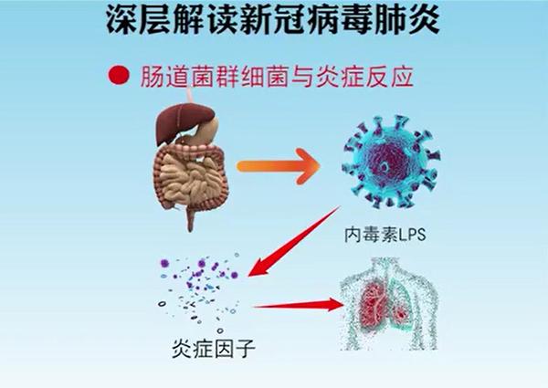 6 肠道菌群与炎症反应jt-x.jpg